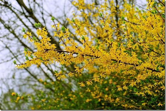 flowers-1333256_960_720